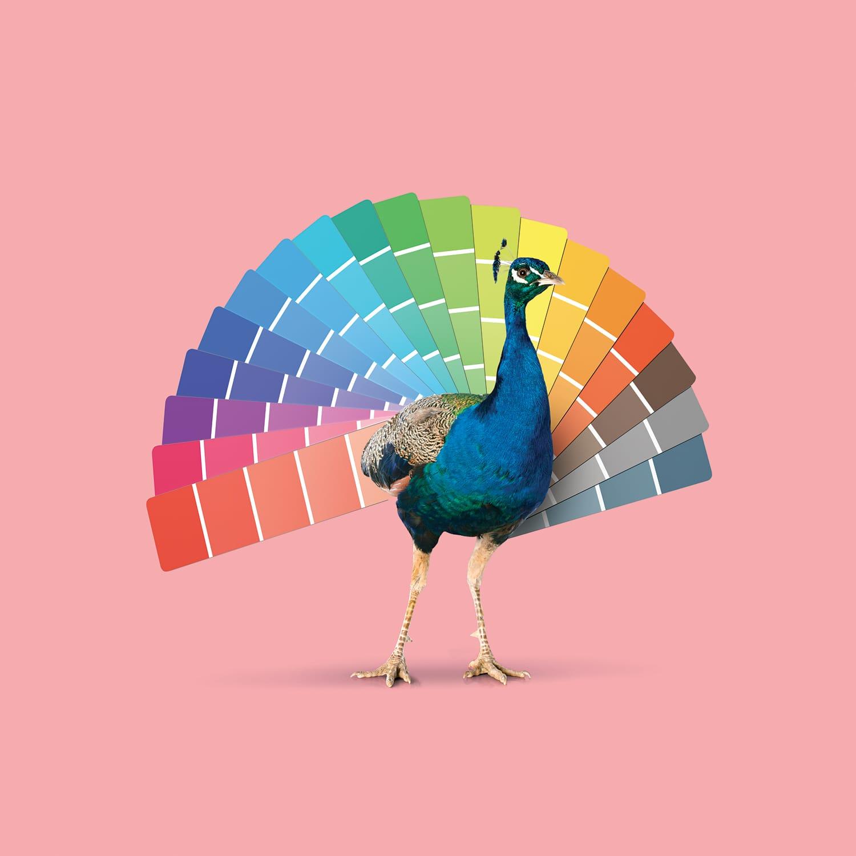 Branding creativo para diferenciarte de la competencia