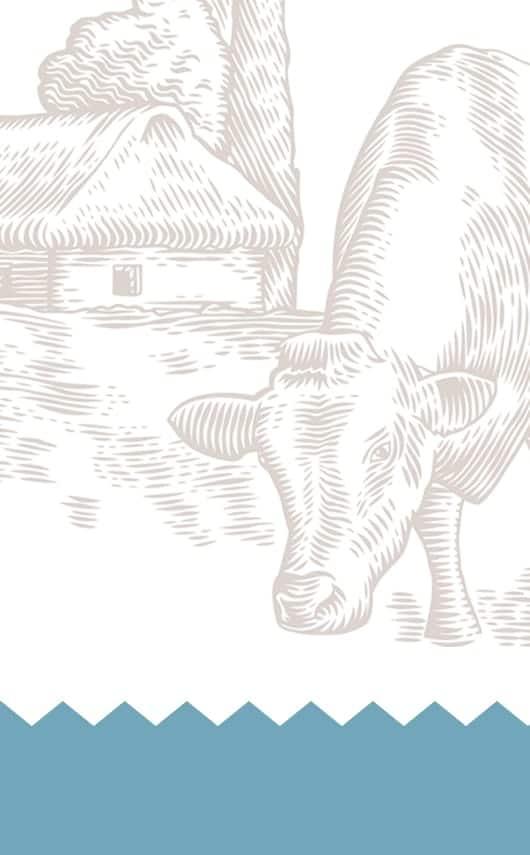 Diseño de logotipo y packaging para leche Cántaro.