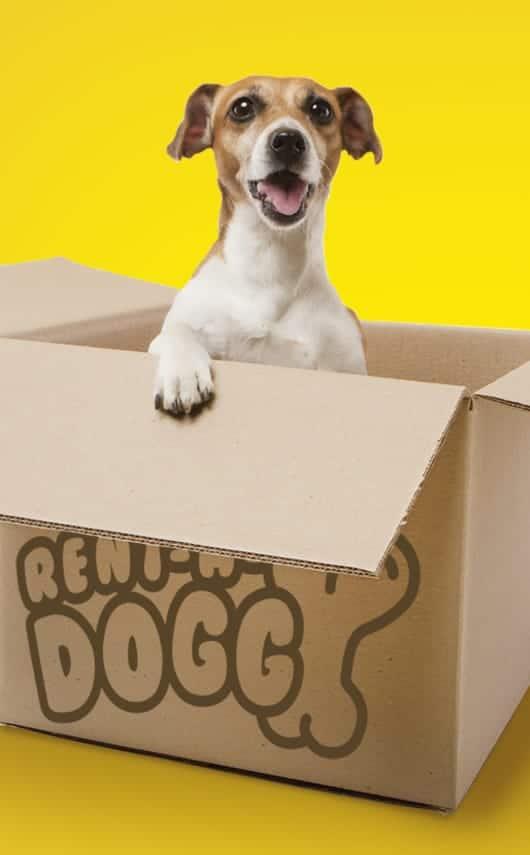 Creatividad, diseño y mix de medios de campaña solidaria para Fundación Amigos del Perro.